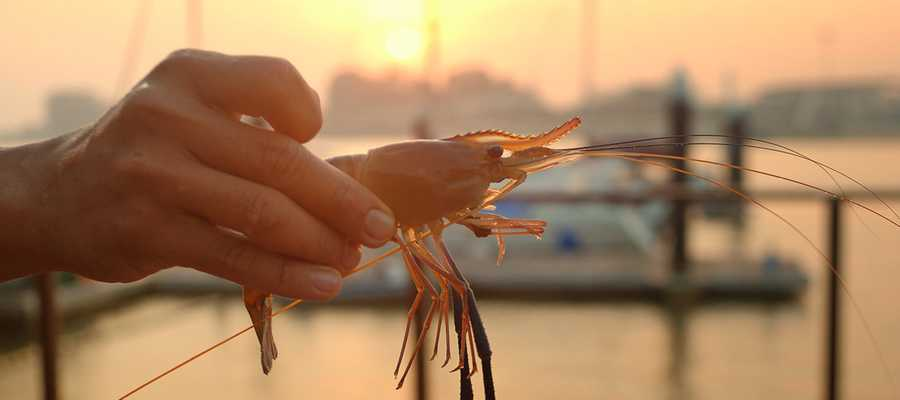 mb-shrimp-fishing